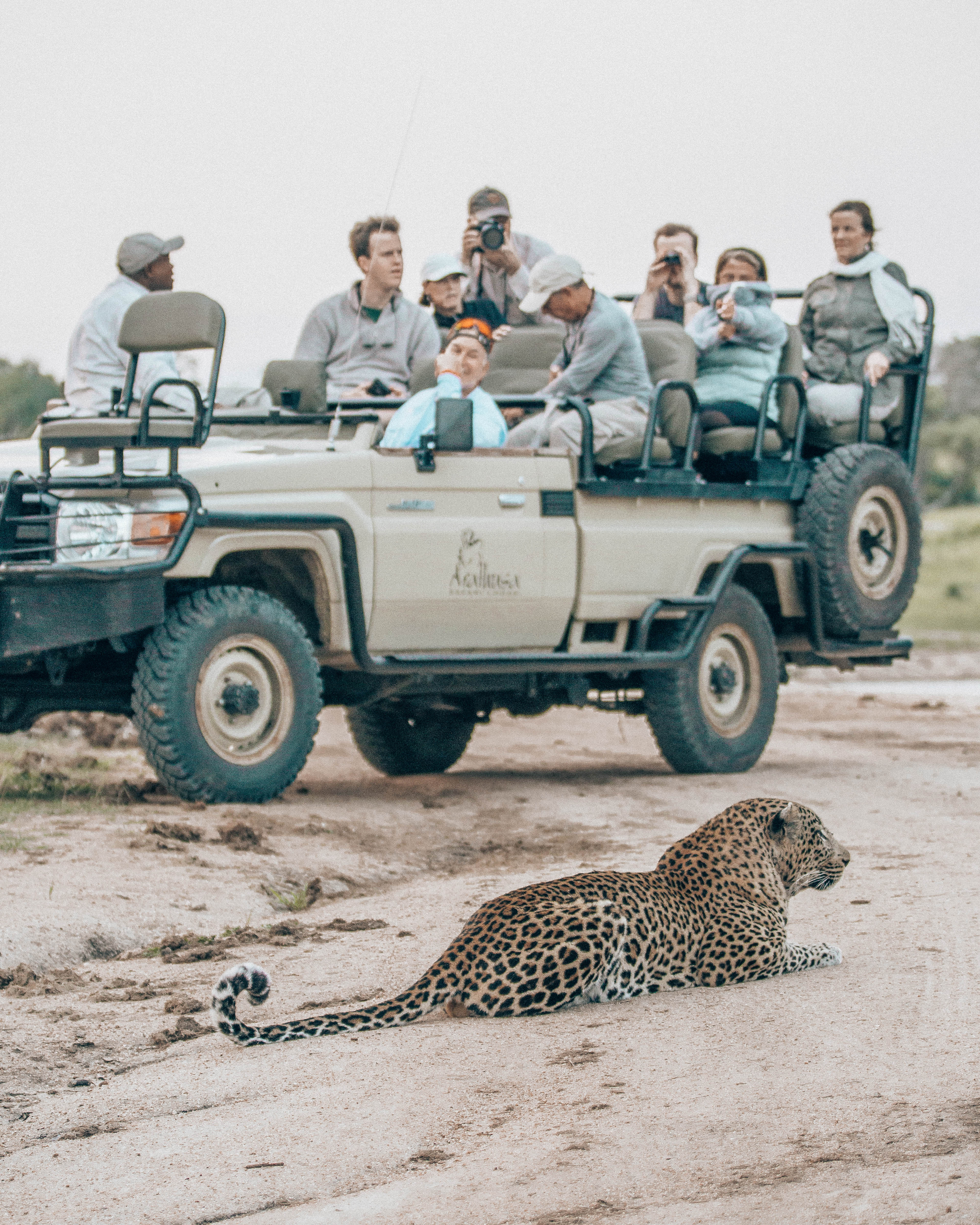 The perspective of the safari vehicle and the animals.