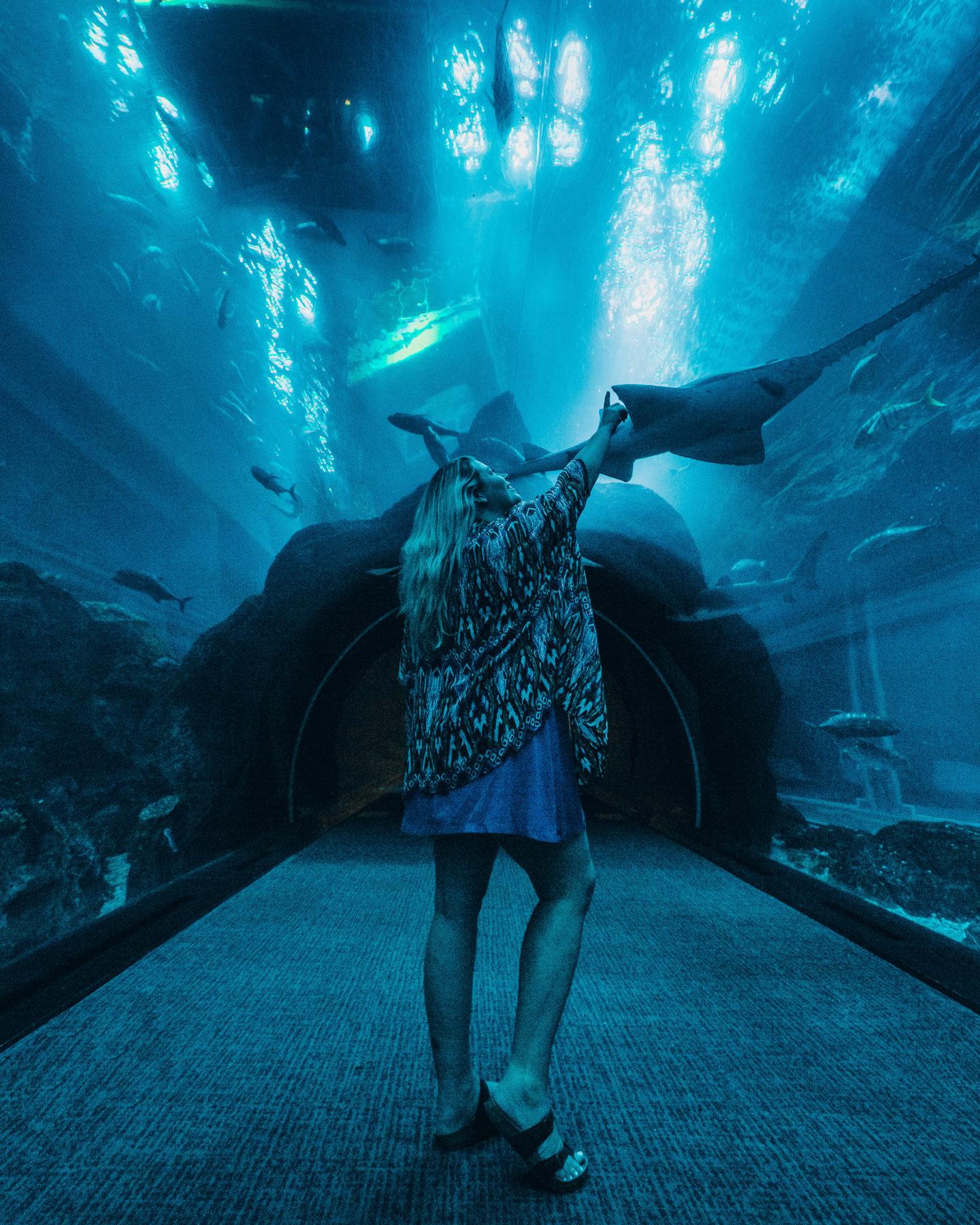 Dubai Aquarium walk-through tunnel