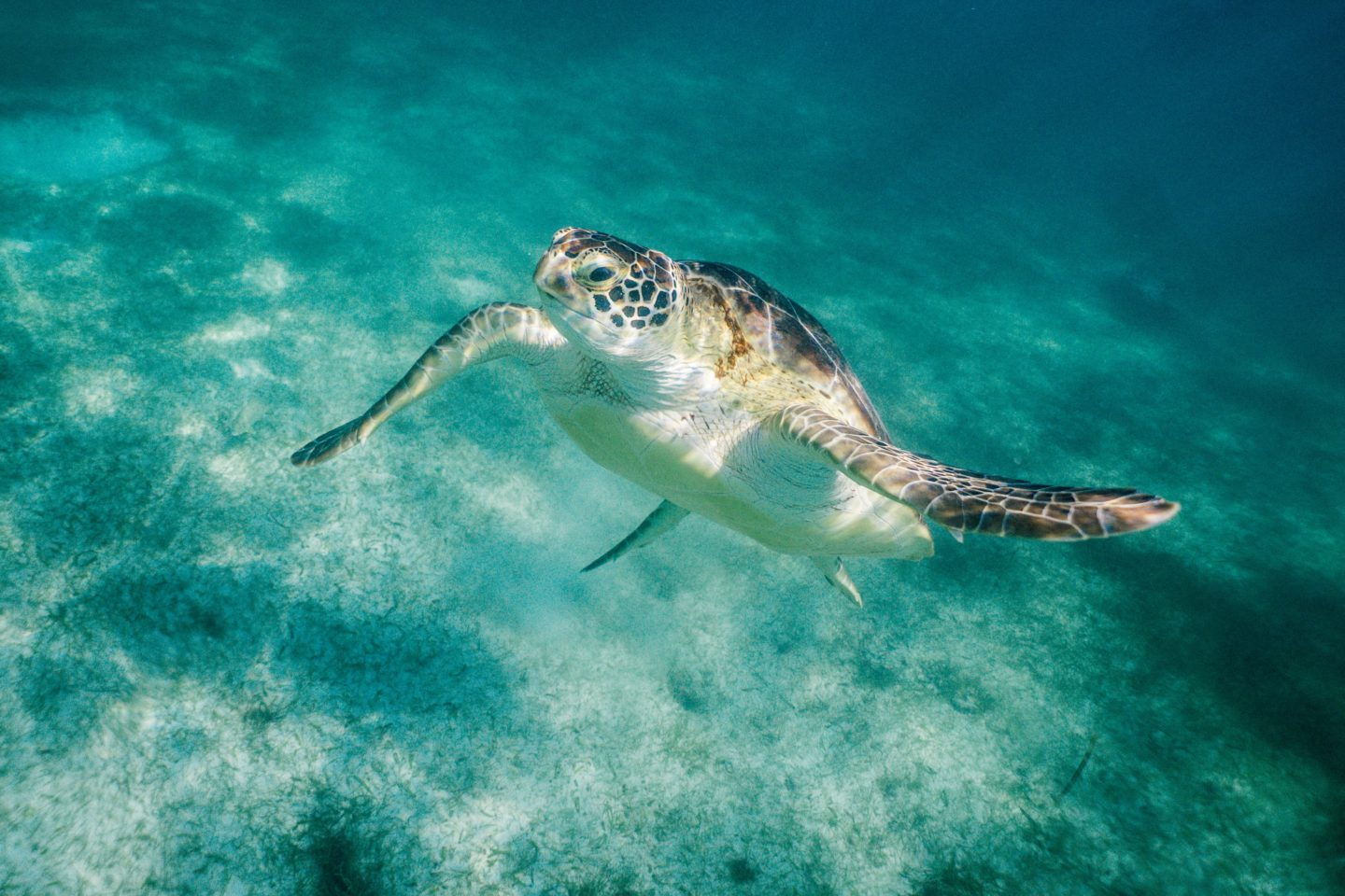 Cozumel All-Inclusive Resorts: Scuba dive with turtles, just like this guy!