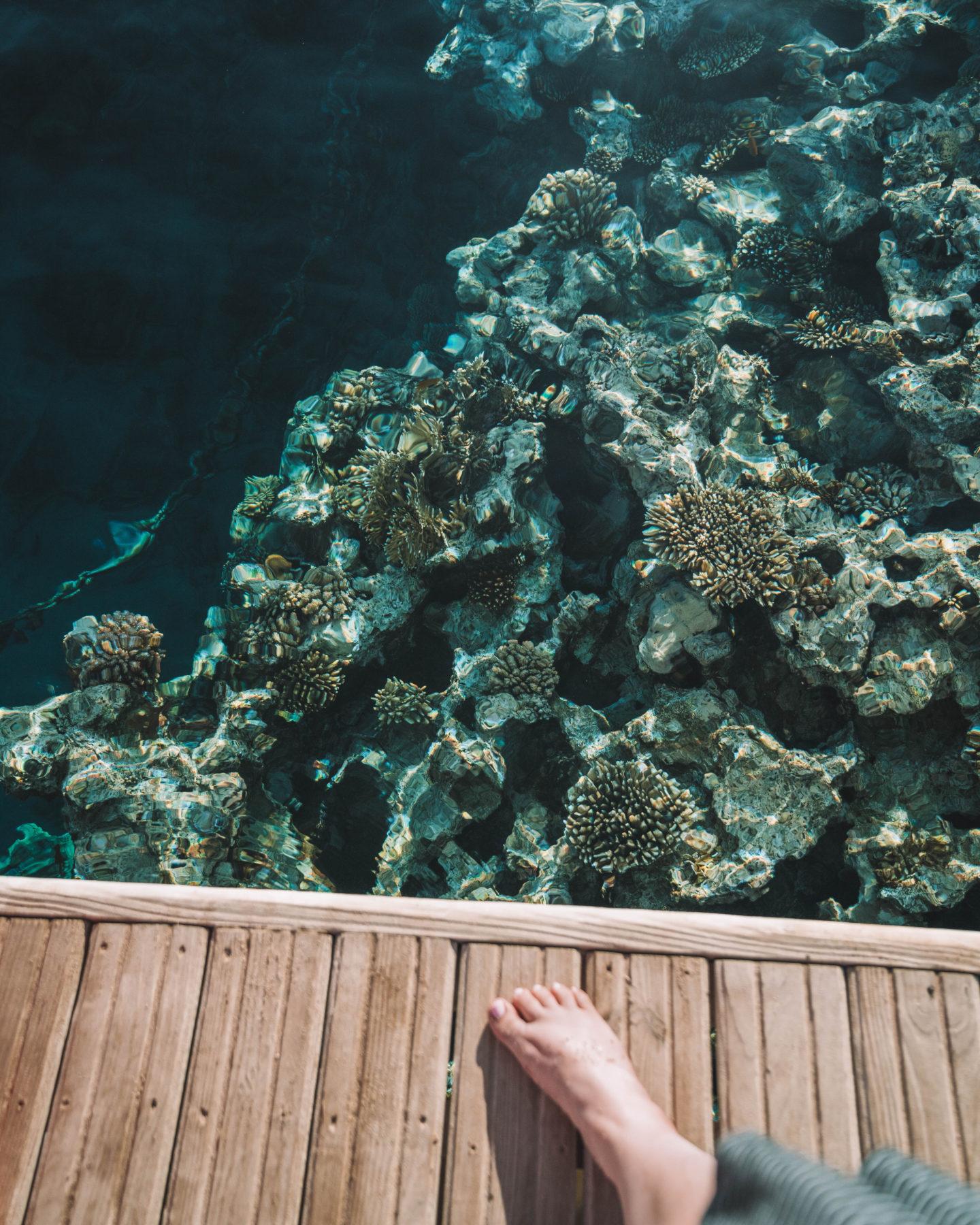 Four Seasons house reef