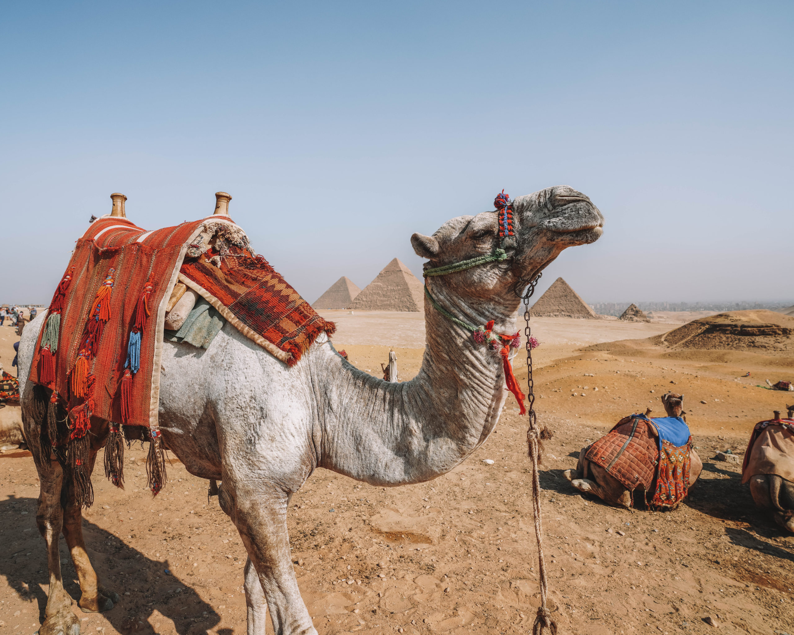 close up of camel with pyramid backdrop | egypt itinerary