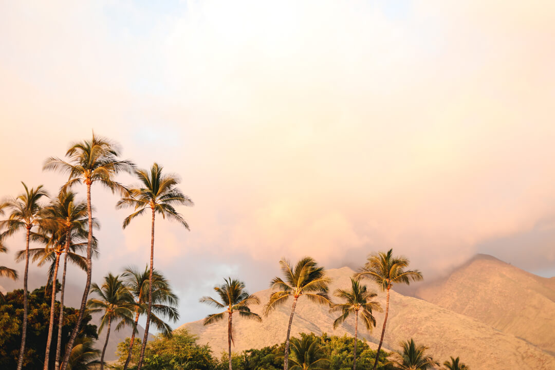sunset with palm trees and mountains in maui hawaii