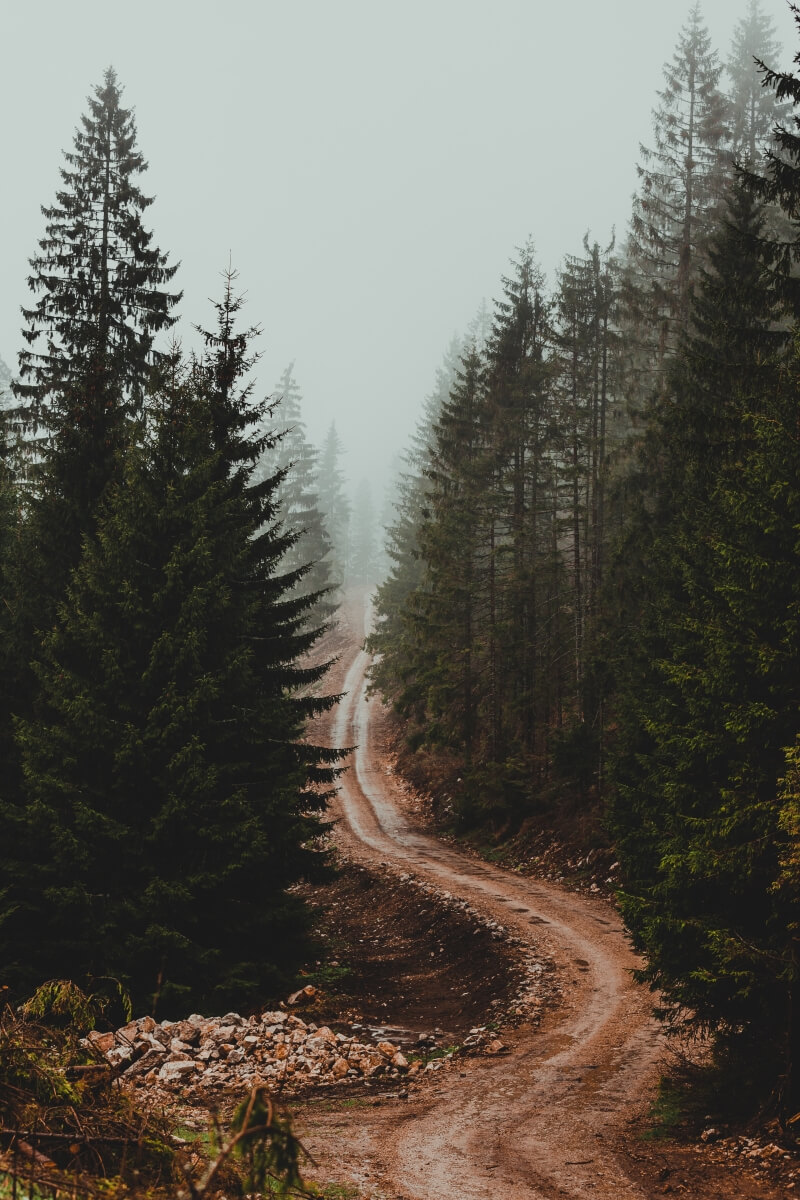 serbia woods