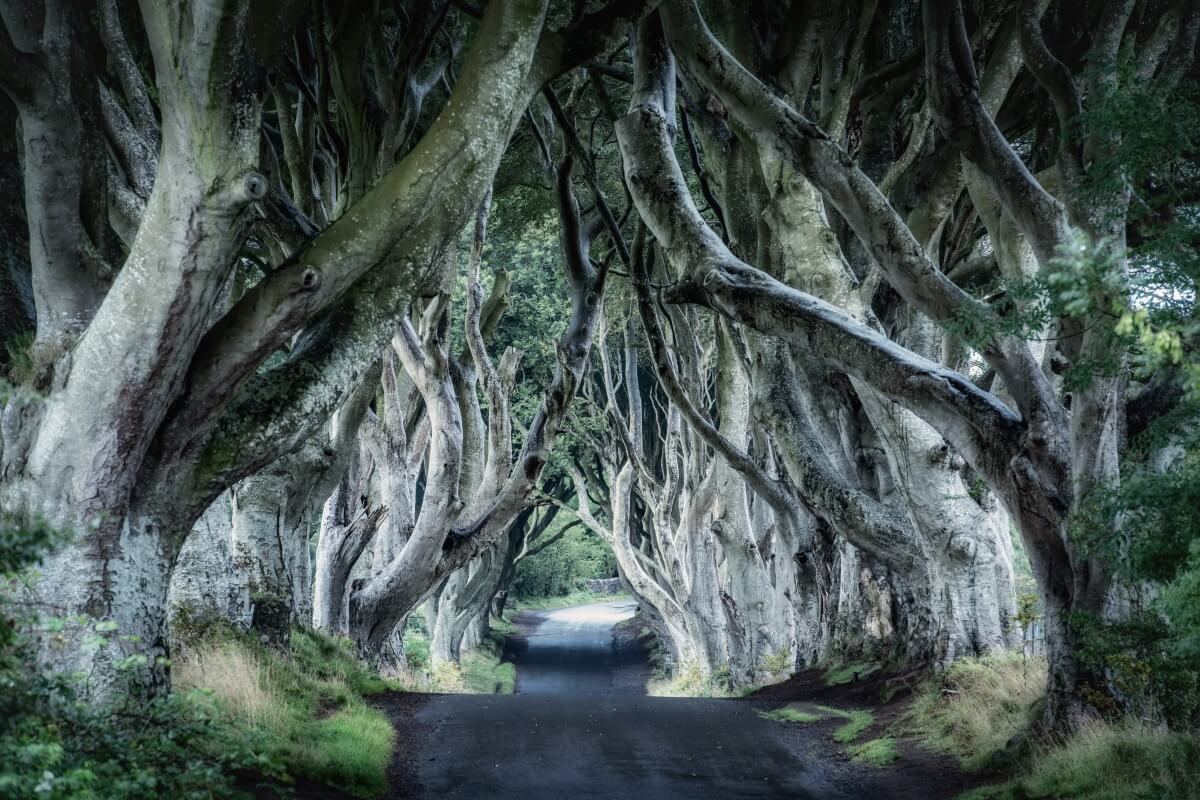 dark hedges northern ireland best places to visit in europe