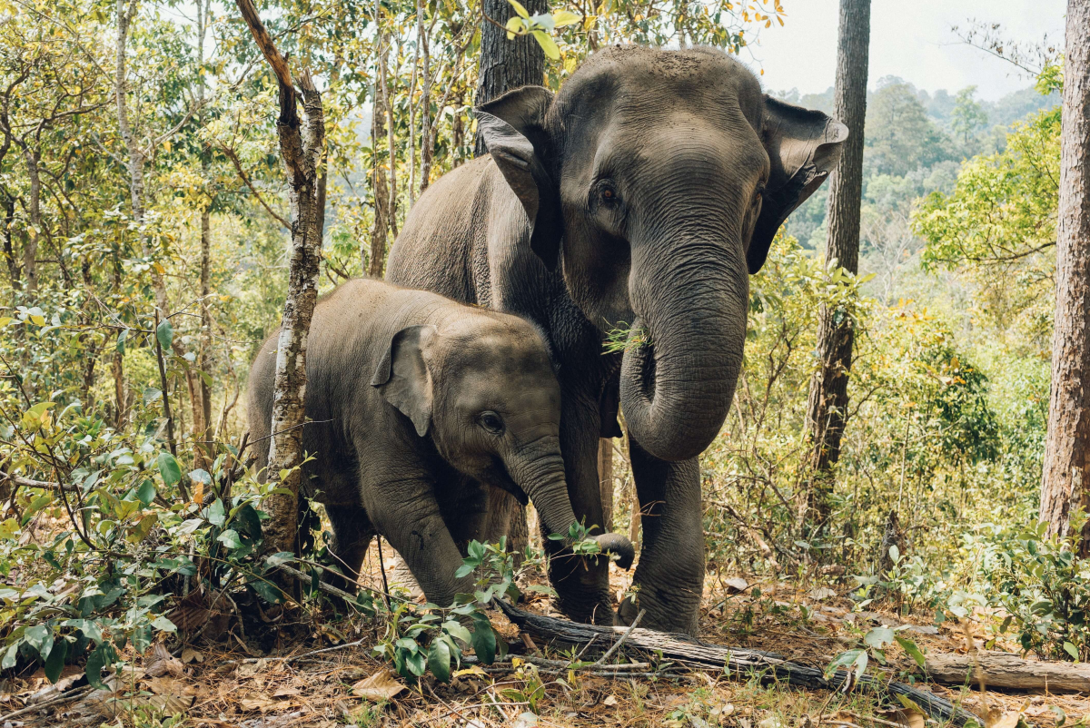 10 days in thailand - elephants in sanctuary