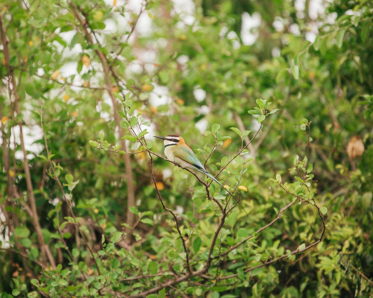 colorful bird queen elizabeth national park uganda itinerary